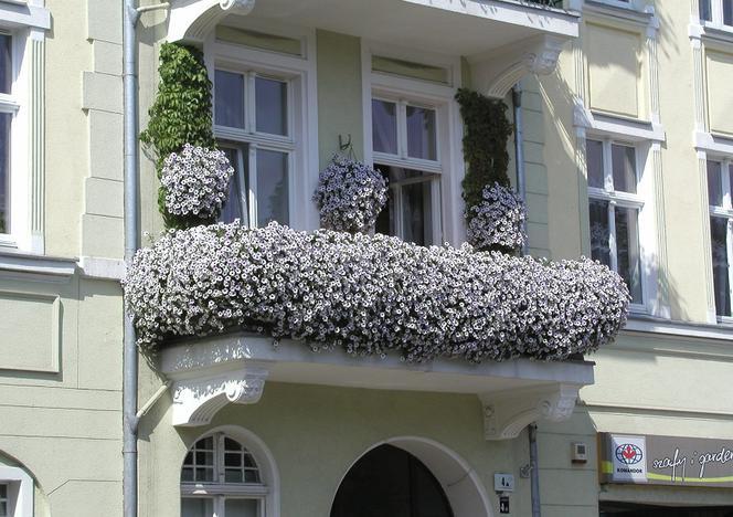 Zaproszenie do wzięcia udziału w konkursie na najpiękniejszy balkon